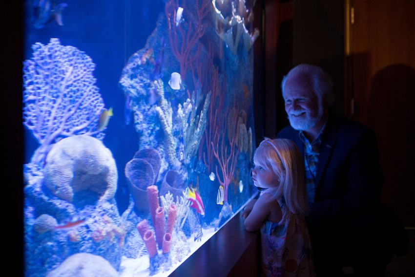 Coral Reef Exploration Exhibit